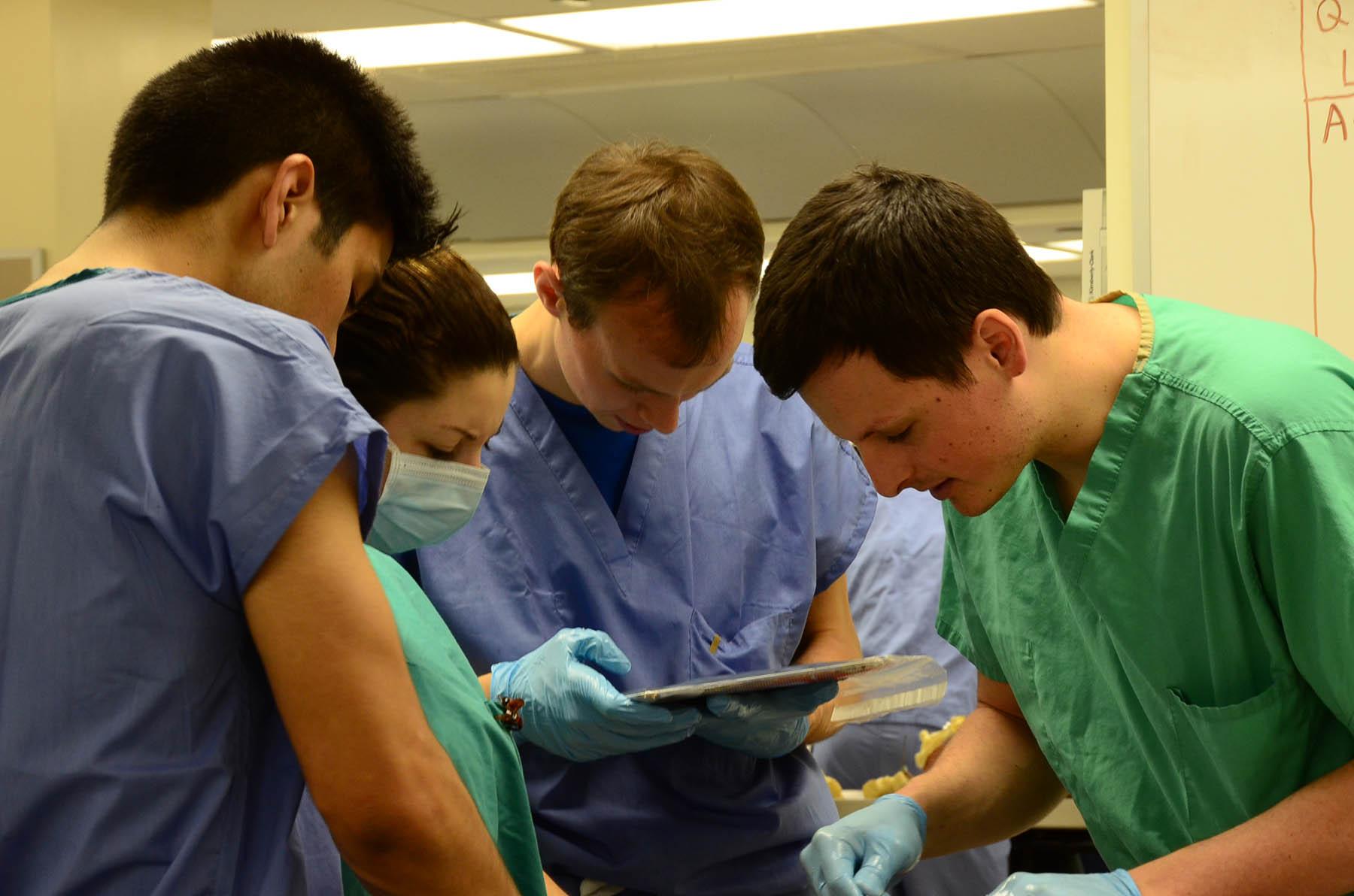 gross anatomy lab